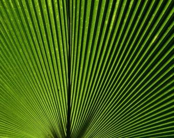 Linear Palm Leaf Photo Print