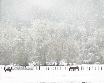 Horse Photography, Horses In The Snow, Equine Photo, Animal Photography, Black, White, Green