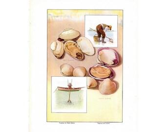 1911 CLAMS original antique seafood ocean sea food lithograph print - clamming clam digging