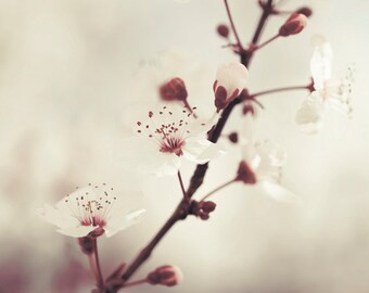 GET 20% OFF TODAY! Botanical print, Fine Art photography, Flower wall art, Living room art, Bedroom decor / Purple plum tree blossom No. 1