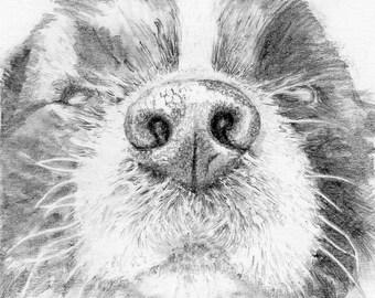 Nose Close Ups - Hand drawn from your photographs. A unique pet portrait.