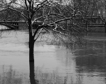 Tree in floodwaters of the Seine in Paris