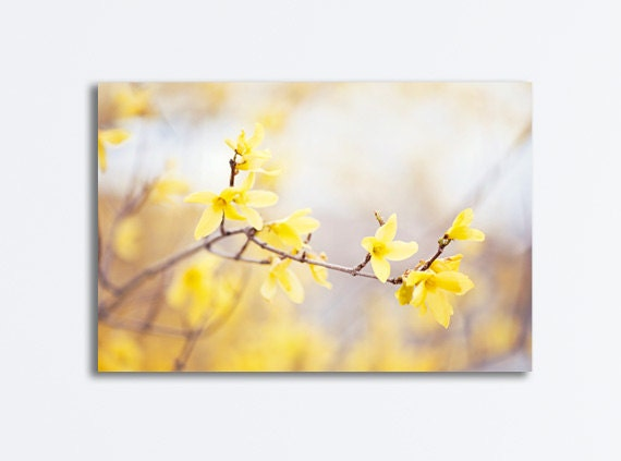 Yellow Forsythia Canvas flower floral spring blossoms