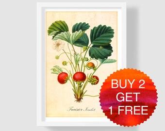 Strawberry Art Print, Botanical Print, Strawberry Wall Art, Antique Art Print, Vintage Strawberry Poster, Fragaria Art, Berry Illustration