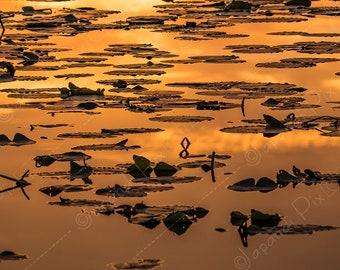 SUNRISE REEDS ll: Photography | photographic print | japandi | fine art | nature | decor | wall art | reed | water | minimalist | sunset