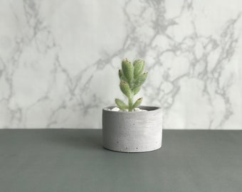 Modern Minimalist Cactus and Succulent Clay Pot Planter Hand Painted in Acrylic White for home, office, cafe, coffee shop