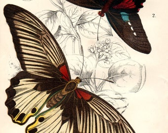 1897 Antique BUTTERFLY PRINT exquisite Chromolithograph