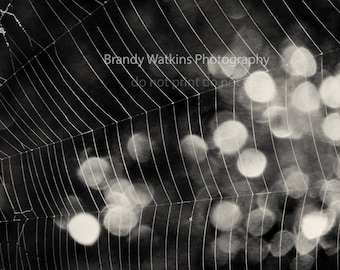 Spider web photo print, web photography print, abstract photograph, abstract decor, black and white wall decor, abstract wall decor, web