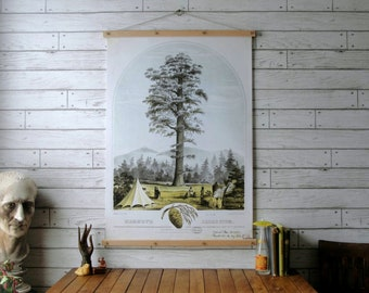 Big Tree Botanical Chart / Vintage Pull Down Chart Reproduction / Canvas Fabric Print / Oak Wood Poster Hangers with Brass / Wall Hanging