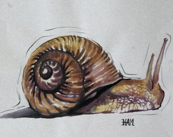 Snail drawing in ink