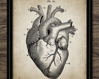 5 vintage human heart anatomy photographs 5x7 heart print cardiology decor human heart anatomy human biology medical student ccuart Gallery