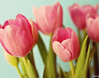 tulips, flowers, pink, green, teal, spring, fine art photography