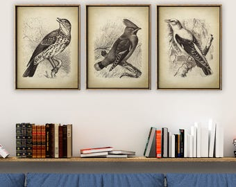 BIRD Print SET of 3, Colorful Birds Poster Set, Songbirds, Oriol, Wall Decor, Room Decor, Bird Wall Art, Bird Art, Bird Drawing