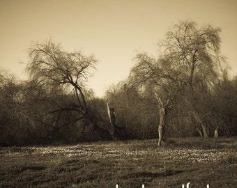 Tree Couple Sepia 8x8 fine print