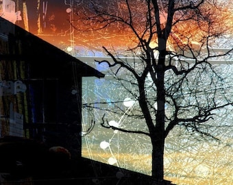 CLEARANCE Winter Photography, Surreal Photograph,  Landscape, Orange, Blue, Black, Silhouette, Tree, Cold -  4x6 Inch Print