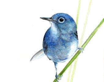 Blue bird, original water color print