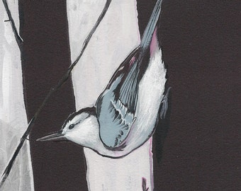 "White-Breasted Nuthatch - bird print, 6"" x 6""."