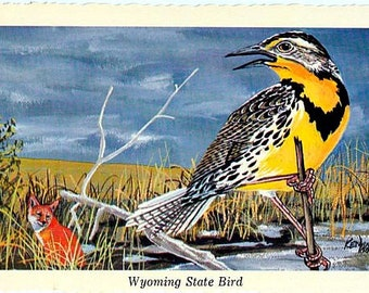 Vintage Wyoming Postcard - Western Meadowlark ... State Bird of Wyoming -- Artist Signed, Ken Haag (Unused)