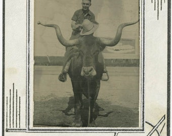 vintage photo 1941 Paper Tintype Man Woman Rides Longhorn Bull Texas 2 photo lot