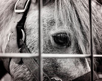Caged - Horse Photography, Animal Photo, Wall Art, Rustic Art, Farmhouse, Black and White, Eye Photo