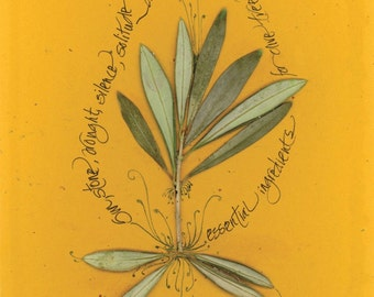 """Blank note card with olive leaves and calligraphy:  """"The Noble Olive"""""""