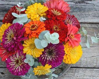 Benary's Giant Zinnia Mix, Mixed Color Zinnia Seeds, Great for Cut Flower Gardens, Butterfly Garden Favorite