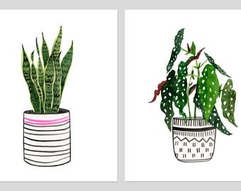 """Zwei Druck-Set: """"Begonia Maculata"""" & """"Bogenhanf"""" Museumsqualität von Lindsay Gardner"""