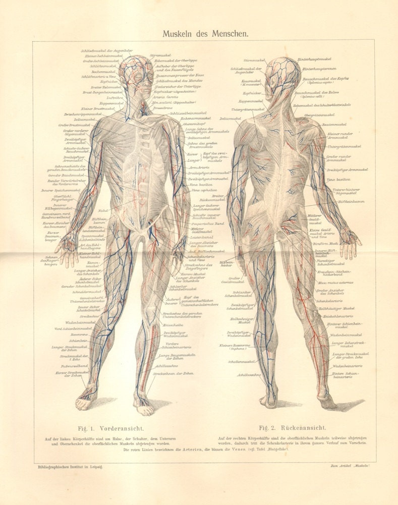 1909 Muscles of the Human Body Original Antique Lithograph