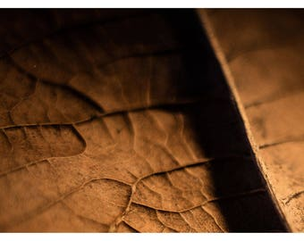 Texture and geometry of a leaf