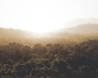 Nature Photography - Jungle Photo, 24x36 20x30 16x20 8x10 5x7 fine art wall decor, wall art, black, green and white landscape forest photo