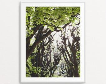 Nature Photography, Paris Photography, Paris Print, Green Trees, Home Decor, Spring Decor, Paris Decor, Nature Wall Art Print, Botanical