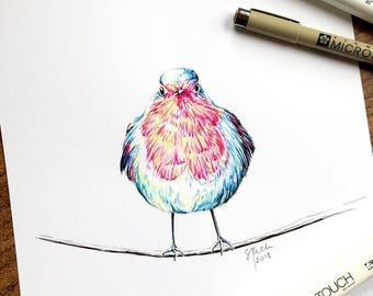 Pen & Ink Original Drawing - English Robin