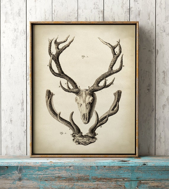 Deer Antlers print Deer Antlers poster animal anatomy print