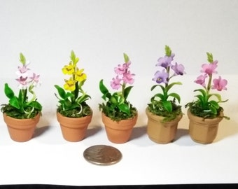 5 Thimble Miniature clay orchids - three Cattleyas and two Vanda's orchid
