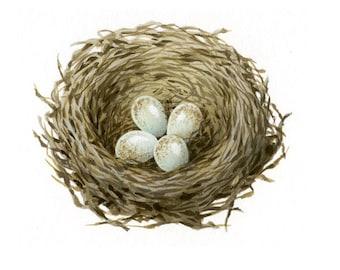 Bird illustration - Nest with eggs - bird art, print of original artwork