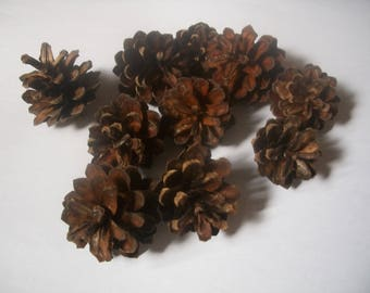 Pinecones in a set of 10