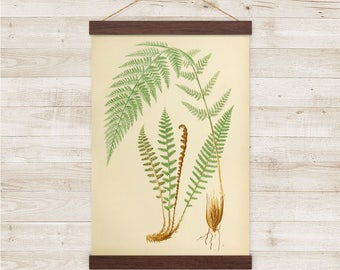 Fern - Vintage Illustration - Reproduction Canvas Print w/ Wooden Poster Hanger - EZA171