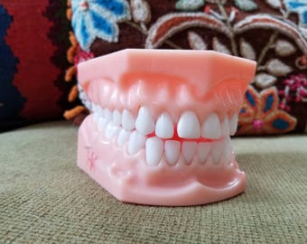 Antique 1970's Orthodontist Dental Teaching Articulating Jaw Model with Removable Teeth Display