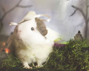 Ghost Guinea Pig Greeting Card