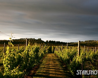 Vineyards of Leelanau Print