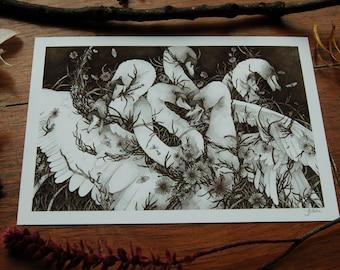 Seven Swans Illustration ~ Giclee Print