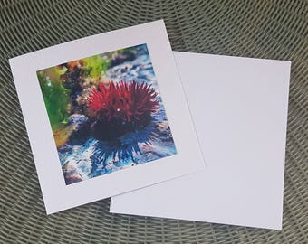 Rosy Rockpool Greeting Card