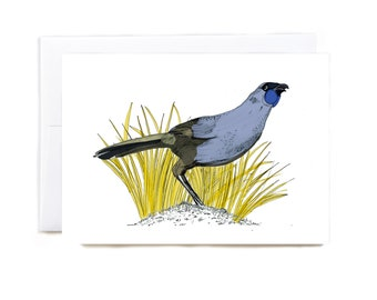 New Zealand Kokako illustrated greeting card