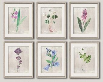 Vintage Botanical Art Prints - Set of 2, 3,4, 6 Vintage Botanical Prints  - Wall Decor