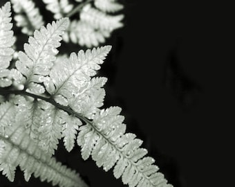 "Botanical photograph, green fern, wall art, home decor -- ""Fronds"", a 5x5-inch fine art photograph"