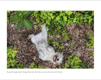 Westie Dog Card - Blank Inside - Irish Proverb - Get Well Greeting Card - Healing Card