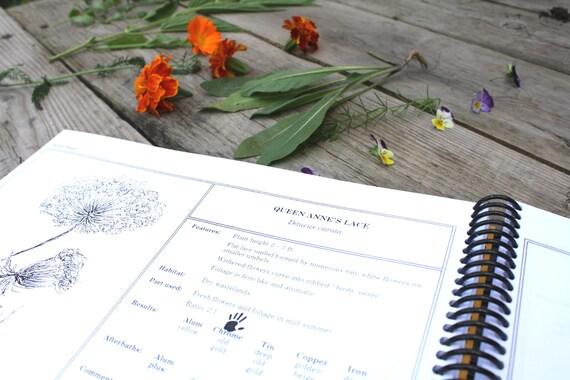 Spektrum Farbstoff Pflanzen Ontario Anleitung zum