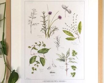 Homegrown Herb Botanical Print - 12x16 inches