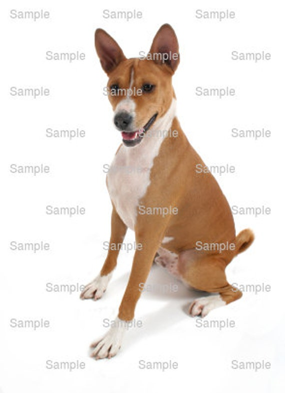 Basenji Dog Birthday - Edible Cake and Cupcake Topper For Birthday's and Parties! - D6597