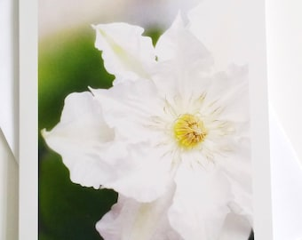 White Clematis - fine art photography greeting card